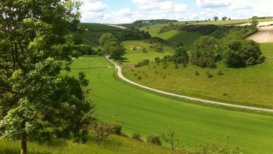 David Hockney: Showcasing Yorkshire's Wolds