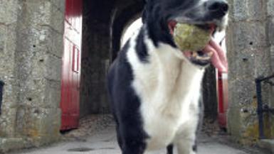 The adventures of Lex: Pendennis Castle
