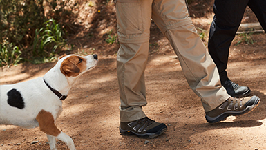 How to Choose the Best Dog Walking Gear