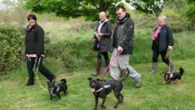 Dog Walking Index