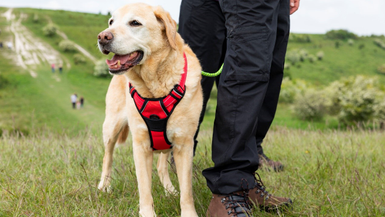 Top Tips and Advice for Hiking with your Dog when Home & Away