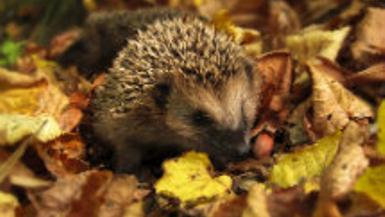 Wildlife In Your Gardens This Autumn/Winter