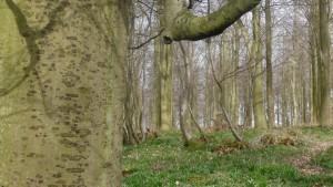 Kings Wood 3