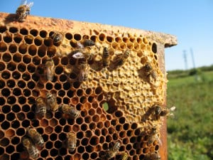 bees-hive-2 (4)